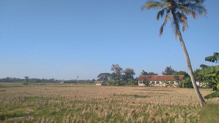 Terancam Gagal Panen, Petani Indramayu Disarankan Daftarkan AUTP Lahannya, Ini Keuntungannya