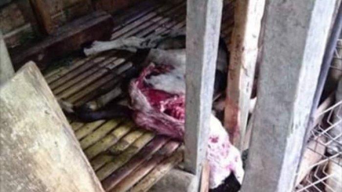 VIDEO Heboh Hewan Mati Mendadak di Cibarusah Bekasi, Bangkai Ayam, Kambing dan Kucing Tergeletak
