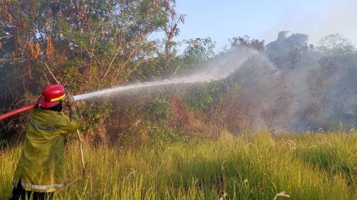 Sehari Terjadi Dua Kebakaran di Indramayu, 4 Hektare Lahan Kebun Ludes, Api Nyaris ke Permukiman