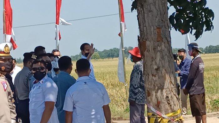 Kedatangan Presiden Joko Widodo dalam kegiatan panen raya di Desa Wanasari, Kecamatan Bangodua, Kabupaten Indramayu, Rabu (21/4/2021).
