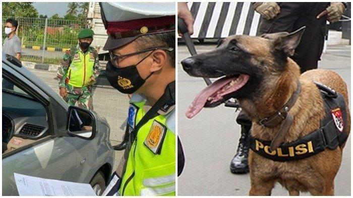 Sopir Travel Gelap Nangis Takut Digigit Anjing Petugas, Akhirnya Ngaku Bawa Pemudik dari Bekasi
