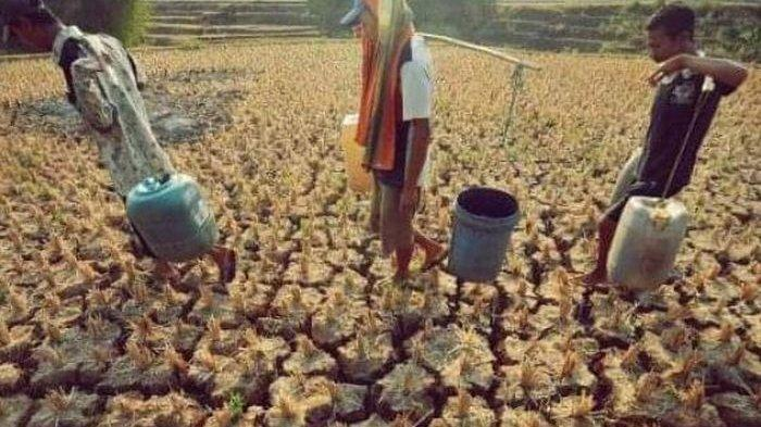 14 Kecamatan di Garut Rawan Alami Kekeringan, Kawasan Pertanian Terancam Gagal Panen