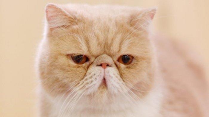 TERNYATA Sosok Pria Ini yang Tega Mencekoki Miras Ciu ke Kucing, Videonya Viral di Media Sosial