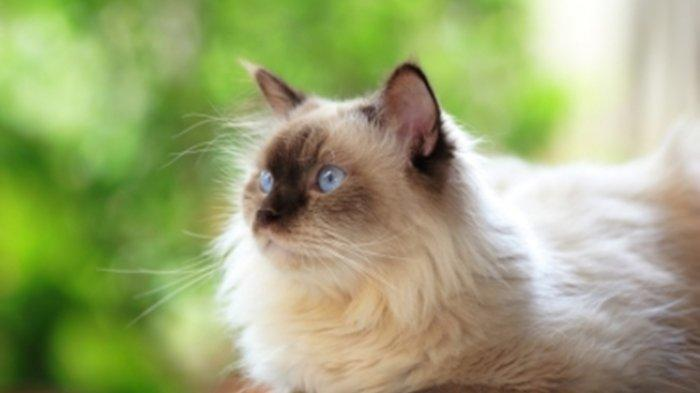 Kucing Suka Mengedipkan Mata Ternyata Ada Artinya, Hewan Peliharaan Lucu Ini Disebut Merasa Terancam