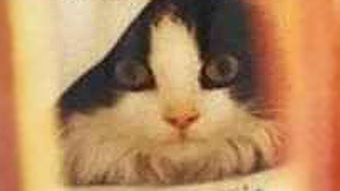 Mitos Tabrak Kucing di Jalan Bisa Kena Sial, Benarkah? Begini Penjelasan Menurut Agama
