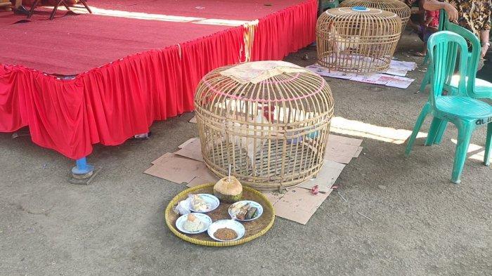 Kurung Ayam Jago, Ritual yang Tak Pernah Ditinggalkan di Pilkades Serentak Majalengka
