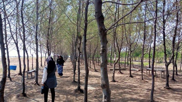 Sejarah Terbentuknya Kawasan Ekowisata Hutan Mangrove Karangsong Indramayu, Dulu Sering Kena Abrasi