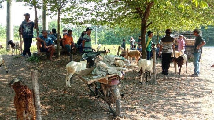 Penjual Domba Pusing Tujuh Keliling, Pasar Domba di Ligung Majalengka Sepi Pembeli Sejak Covid-19