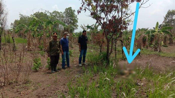 Polisi Temukan Dompet di Dekat Kerangka Manusia yang Hangus Terbakar di Indramayu, Ini Identitasnya