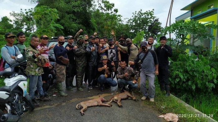 Sudah 1 Sapi dan 72 Ekor Kambing di Kuningan Tewas Dimangsa, Kini Giliran 6 Ekor Ajag Tewas Ditembak