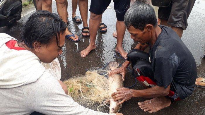 Menjaring Ikan Saat Banjir, Pria di Karawang Ini Malah Dapat Aligator