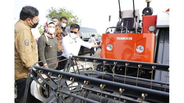 Menteri Pertanian Klaim Ada 8 Juta Petani Baru di Indonesia, Banyak yang Di-PHK Jadi Petani