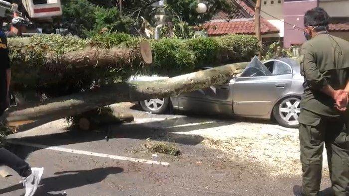Pohon Tumbang di Bandung Menimpa Dua Mobil, Pengendara SelamatKarena Lagi di Luar