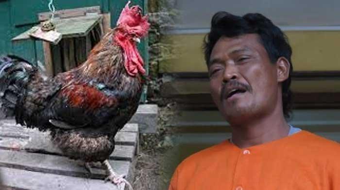 Pria di Sidoarjo Tebas Sahabatnya Pakai Celurit, Tersinggung Dihina Tampangnya Tampang Maling Ayam