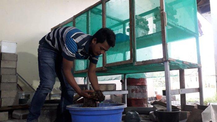 Para Pemuda di Indramayu Ini Sulap Limbah Organik Menjadi Maggot BSF yang Bagus untuk Pakan Ternak