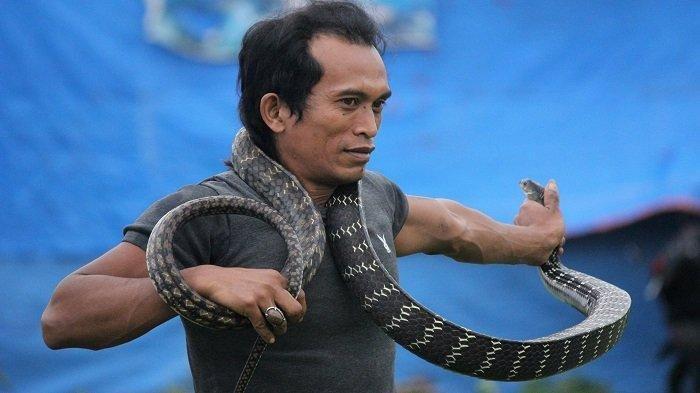 Sosok Pawang Gondrong Taklukkan 200 Ular Termasuk King Kobra, Tak Kalah Hebat Dengan Panji Petualang