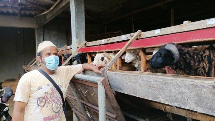 Penjualan Hewan Kurban di Indramayu Laris Manis, Pedagang Akui karena Hal Ini