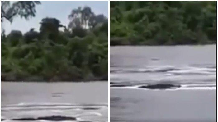 HEBOH Penampakan Sosok 'Naga' di Sungai Kalteng, Tampak Sosok Hewan Raksasa, Lihat Videonya
