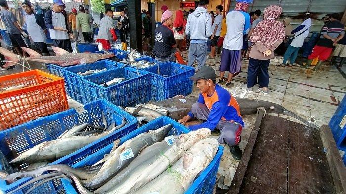 Harga Ikan Tangkap di Indramayu Naik, Tapi Nelayan Justru Alami Kerugian, Ini Peyebabnya