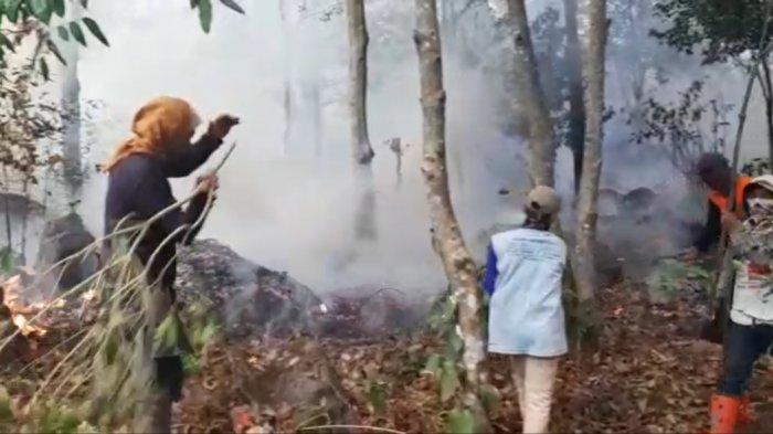 Kebakaran di Gunung Cermai Sempat Hanguskan Beberapa Jenis Tumbuhan, Jalur Pendakian Masih Ditutup