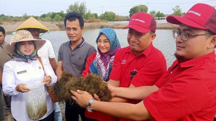 Musim Penghujan Nelayan di Desa Singaraja Indramayu Budidaya Rumput Laut Sebagai Penganti Pendapatan