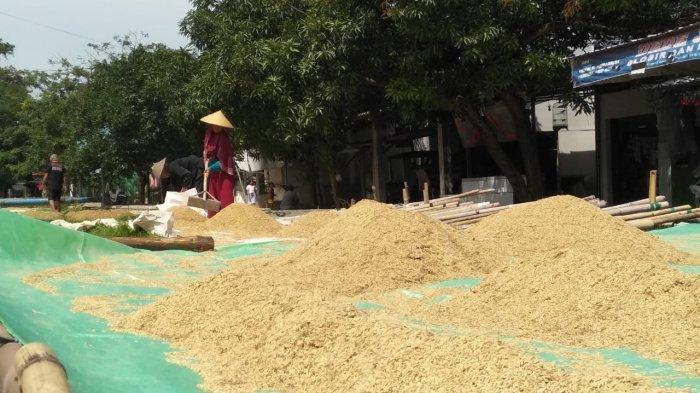 Harga Gabah di Majalengka Masih Rendah, Petani Kembali Merugi