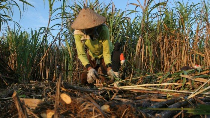 PT PG Rajawali 2 Kecam Kekerasan Terhadap Petani Tebu Jatitujuh, Minta Polisi Tindak Tegas Pelaku