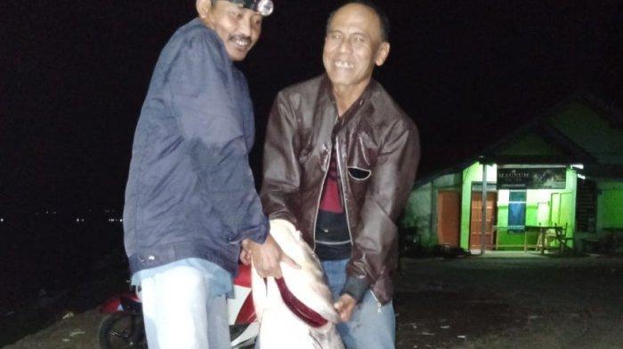 Ikan Raksasa di Waduk Darma Kuningan, Bobot 38 Kg, Panjang 128 Cm, Butuh 30 Menit untuk Menangkapnya