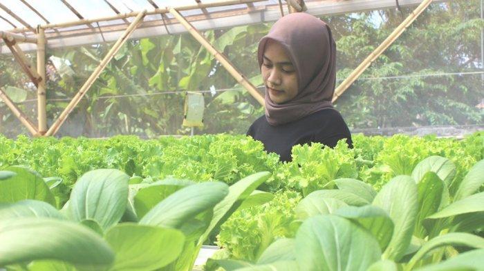 Petani muda di kebun Tugu Hidroponik di Desa Tugu, Kecamatan Sliyeg, Kabupaten Indramayu, Minggu (19/9/2021).