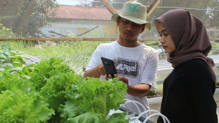 Petani muda saat menunjukan kerja aplikasi android dalam manajemen tanam di kebun Tugu Hidroponik di Desa Tugu, Kecamatan Sliyeg, Kabupaten Indramayu, Minggu (19/9/2021).