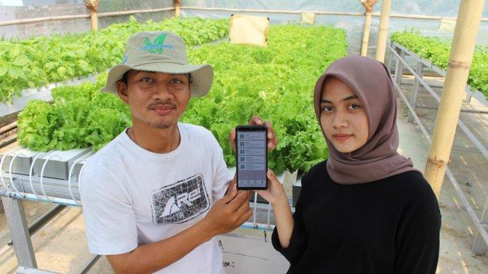 Lulus Kuliah, Pemuda di Indramayu Ini Tak Minat Kerja di Perusahaan dan Pilih Jadi Petani Hidroponik