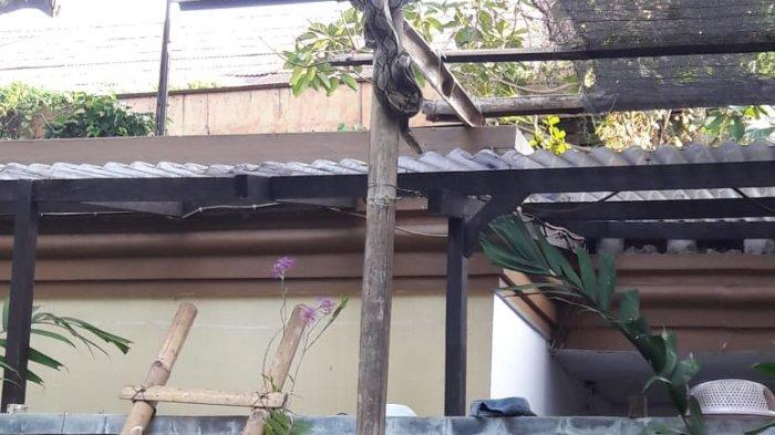Petugas Damkar Kuningan saat evakuasi ular phyton di rumah warga dan Rentul Pawang Ular saat evakuasi King Kobra Beberapa waktu lalu di Blok Salahonje, Kelurha Citangtu