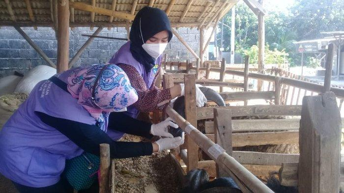 Pemkot Cirebon Minta Masyarakat Berkurban Mulai H+1 Iduladha, DPPKP Siapkan Tim Pemeriksaan