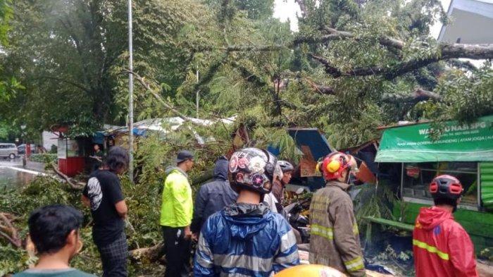 Hujan Angin, Dua Pohon di Jalan Hassanudin Bandung Tumbang dan Menimpa Tiga Pemotor, Satu Luka Berat