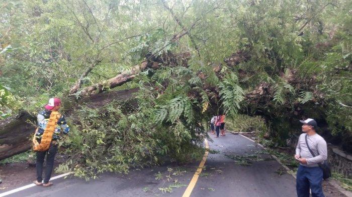 Pohon Besar Tumbang Tutup Jalan Nasional di Bantargadung Sukabumi, Arus Lalin Sempat Macet