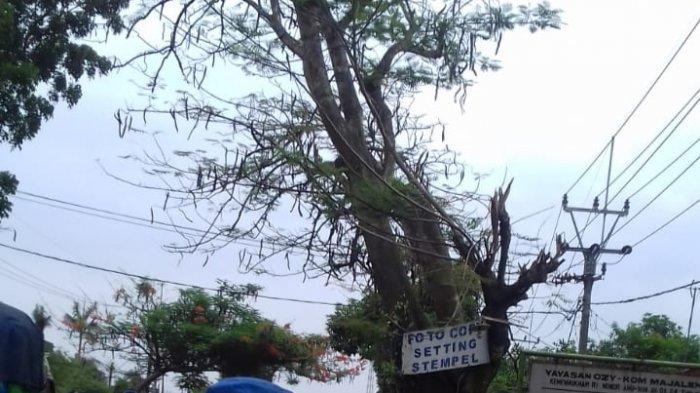 Takut Pohon Tua Tumbang dan Makan Korban, Warga Panjalin Kidul Majalengka Minta Pohon Ditebang