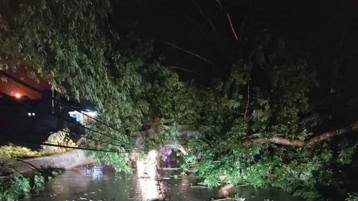 Keluarga Farid & Jauhari Lolos dari Maut Saat Pohon Asem Tumbang Menimpa Rumah, Halangi Jalan Gabus