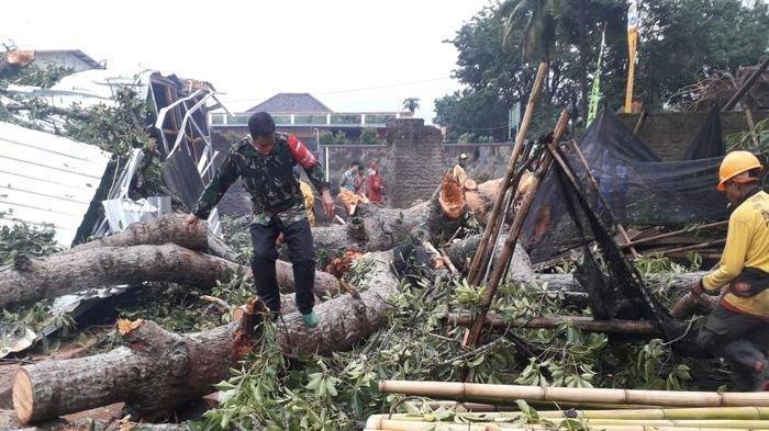 Sejumlah Pohon Besar Tumbang di Kuningan, Kejadian Berlangsung Saat Hujan Deras Disertai Angin