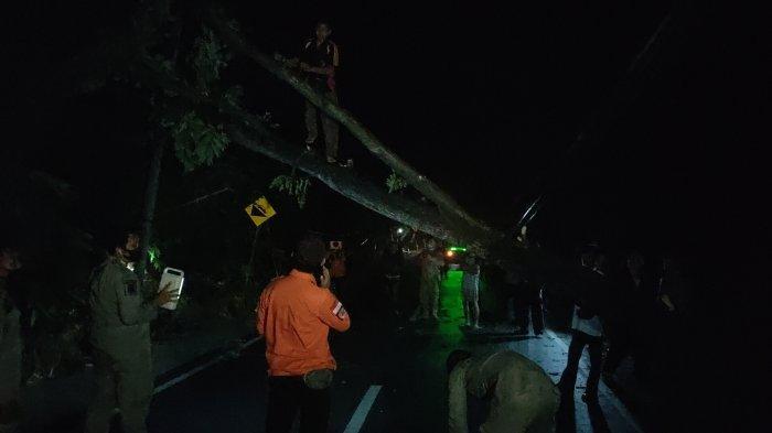 Pohon Besar Tumbang di Jalan Raya Maja-Majalengka Akibat Angin Kencang, Menutupi Badan Jalan
