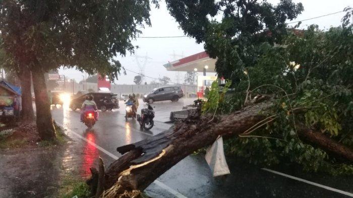 Pohon tumbang saat hujan deras dan angin puting beliung menerjang Kuningan, Minggu (11/4/2021).