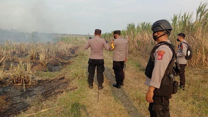 Diduga Dibakar Orang Indramayu, Polisi Majalengka Dalami Peristiwa Pembakaran Lahan Tebu Cisarewu