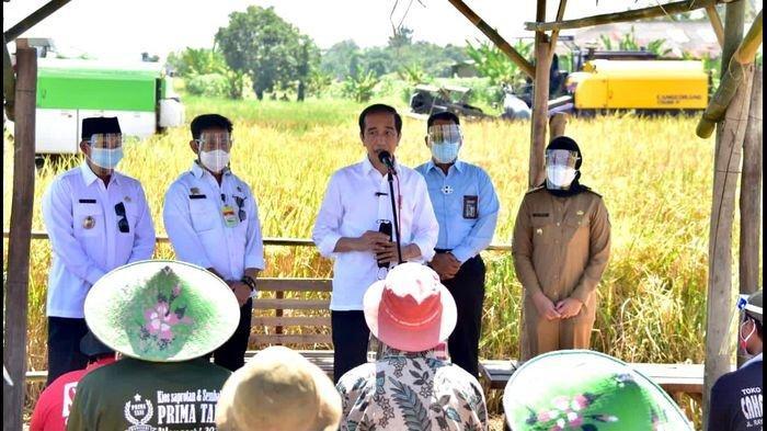 Petani Indramayu Pamerkan Hasil Panen Raya Saat Dikunjungi Jokowi, Minta Bantuan Langsung Disetujui