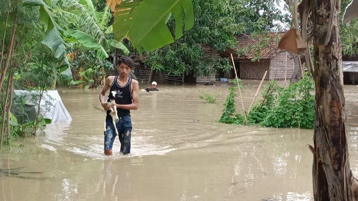 Petugas dan warga saat mengevakuasi kambing dan domba dari terjangan luapan Sungai Cimanuk di Blok Bungkul Timur Kelurahan Bojongsari, Kabupaten Indramayu, Jumat (15/1/2021).