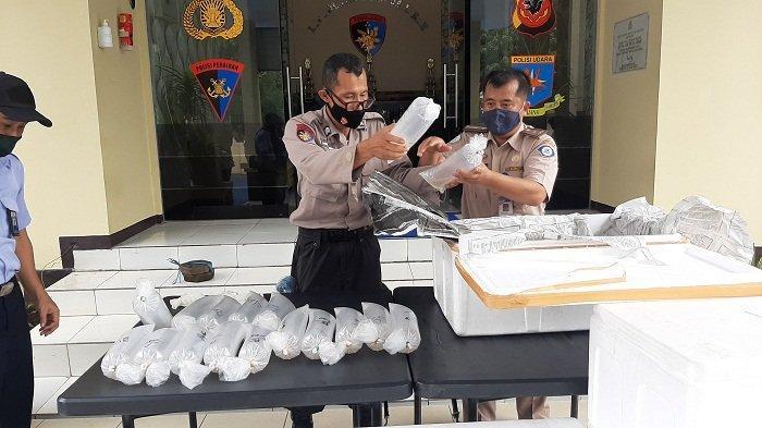 Benih Lobster Sitaan Ditpolairud Polda Jabar Bakal Dilepasliarkan di Pangandaran