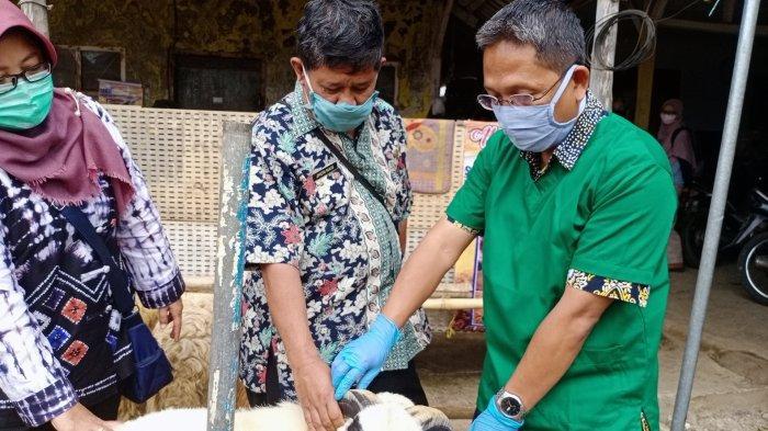 Jelang Hari Raya Iduladha 1441 Hijriyah, Ratusan Hewan Kurban di Kuningan Diperiksa Dokter Hewan