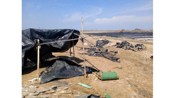Harga Garam di Indramayu Anjlok Buat Petani Garam Merugi, 6 Lahan Garam Dibiarkan Terbengkalai Rusak