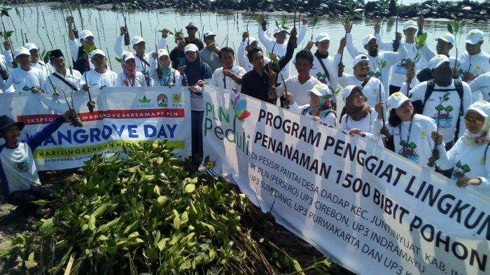 Sanggar Lingkungan Hidup Ajak Masyakarat Jaga dan Rawat Tanaman Mangrove