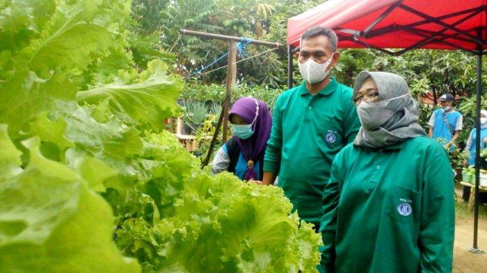 Kisah Kaum Ibu Rancakalong di Masa Pandemi, Olah Pekarangan Jadi Sayuran Siap Jual