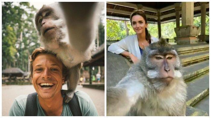 selfie-monkeyy.jpg