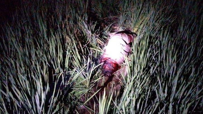 HEBOH Pria Tewas Mengenaskan dengan Luka di Sekujur Tubuhnya di Tengah Sawah di Cileunyi